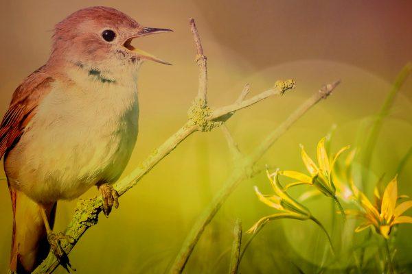 Singvogel und Blume